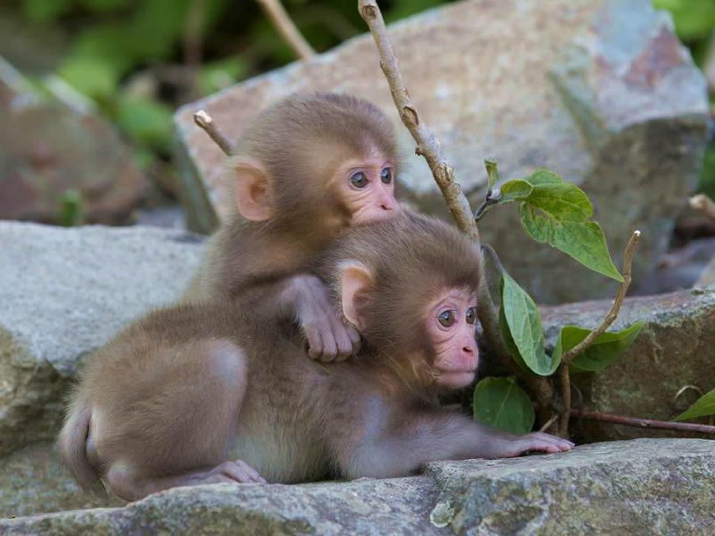 儿童双语寓言故事(6):调皮的猴子