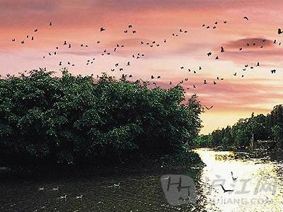 四年级语文上册《鸟的天堂》图片素材-打印版式