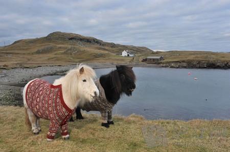 苏格兰观光大使很可爱(视频)