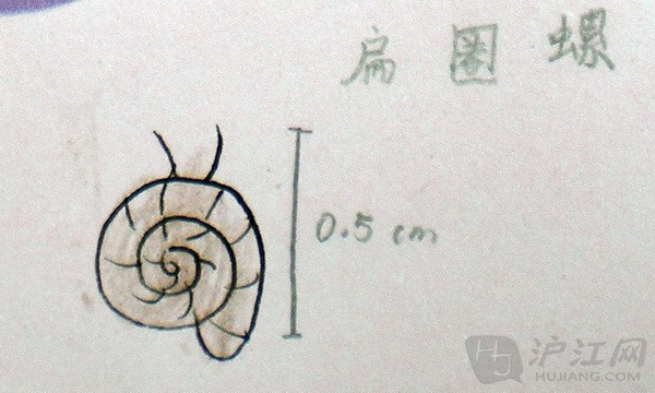 小学自然笔记:上海科技馆湿地生物记录——一群自然