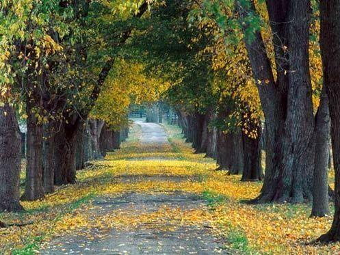 美丽的秋景
