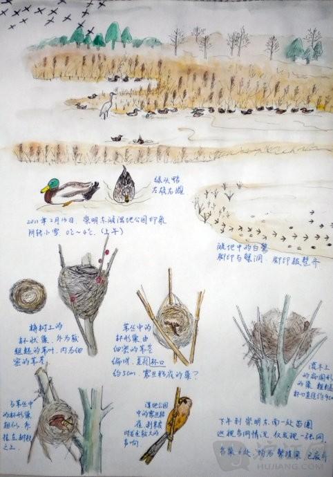 小学自然笔记:崇明东滩湿地公园印象