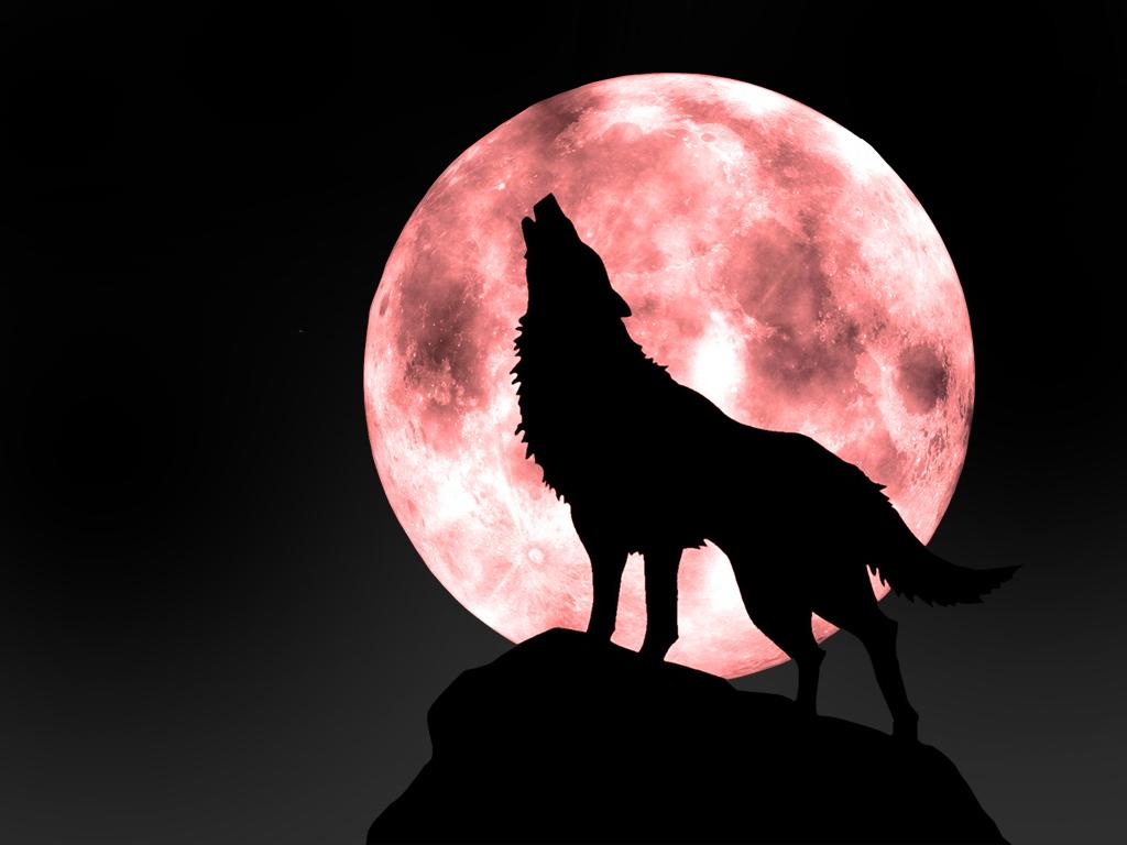 狼图片素材01