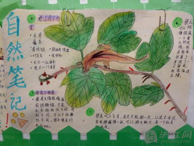这是怎样一所奇妙的学校:毛毛虫听着校园里朗朗的读书声快乐地成长,孩子们趴在土地上,聆听大自然老师讲述有关这个星球最神奇的故事…… 这所把大自然拥在怀里的学校就是上海市宝山实验小学,而为这所学校带来无穷创意的便是周斌老师和她的同事,以及那群可爱的孩子们。 绚丽的自然笔记墙