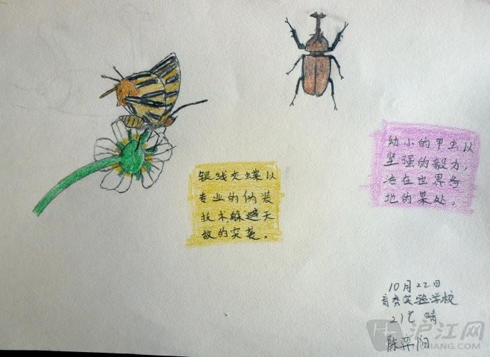 小学自然笔记:寻找大自然的孩子-打印版式