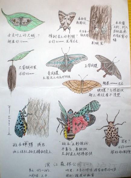 小学自然笔记:上海滨江森林公园