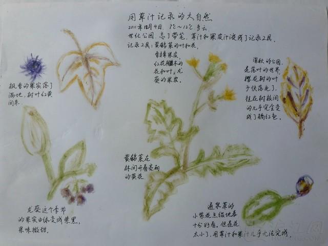小学自然笔记:植物的彩虹色-打印版式