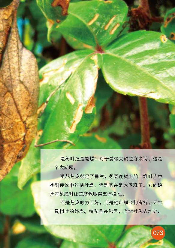 枯叶的芝麻书(8)隐身科学登峰造极的本领蝶苏海食品安莲夏江图片