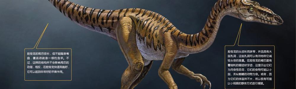 腔骨龙:人类把它的化石送到了太空