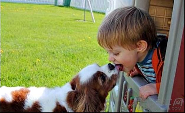 """来看看下面这组孩子和动物亲吻""""互咬""""的萌图吧,保证你笑"""