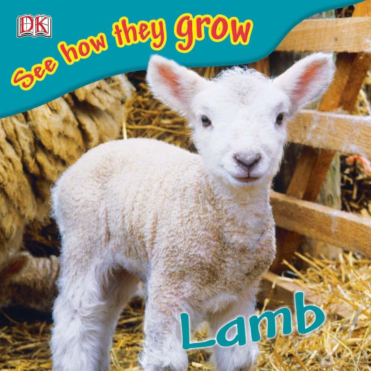 真小羊动物头像