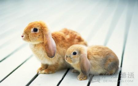 背单词网站_看笑话学德语:爸爸和兔子_沪江英语