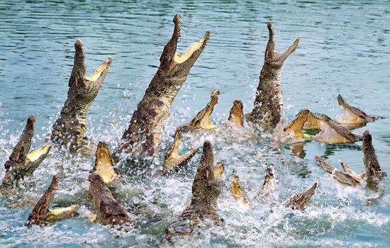 广州长隆鳄鱼公园