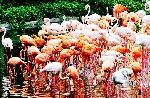 广州长隆香江野生动物园