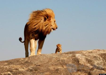 只有狐狸看破了狮子的诡计,因为它看到只有动物们进去的脚印而并没有