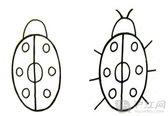 七星瓢虫简笔画:观察七星瓢虫