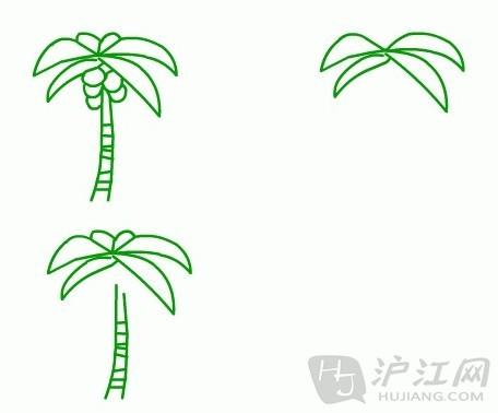 手抄报花边:儿童简笔画椰子树