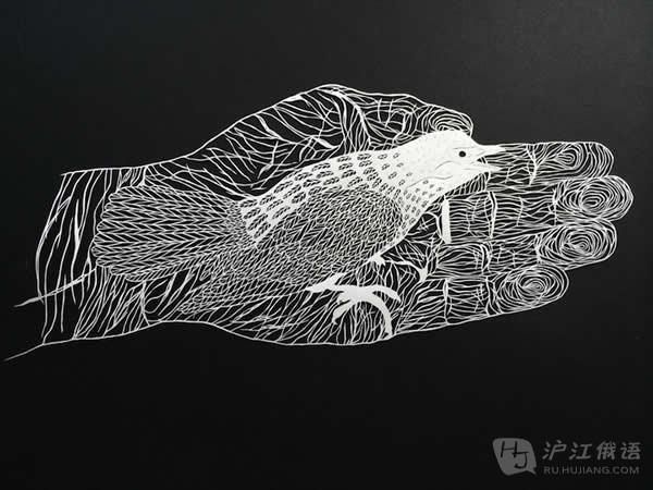 植物,海洋动物