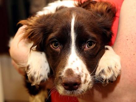 人类好伙伴 狗狗真能听懂你的话(转载) - 大卫 - 峰回路转