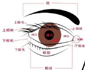 结合眼球的外部结构图:故图示中1是瞳孔,2是巩膜,3是虹膜,4是眼睑.