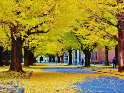 世界名校:你不知道的东京大学