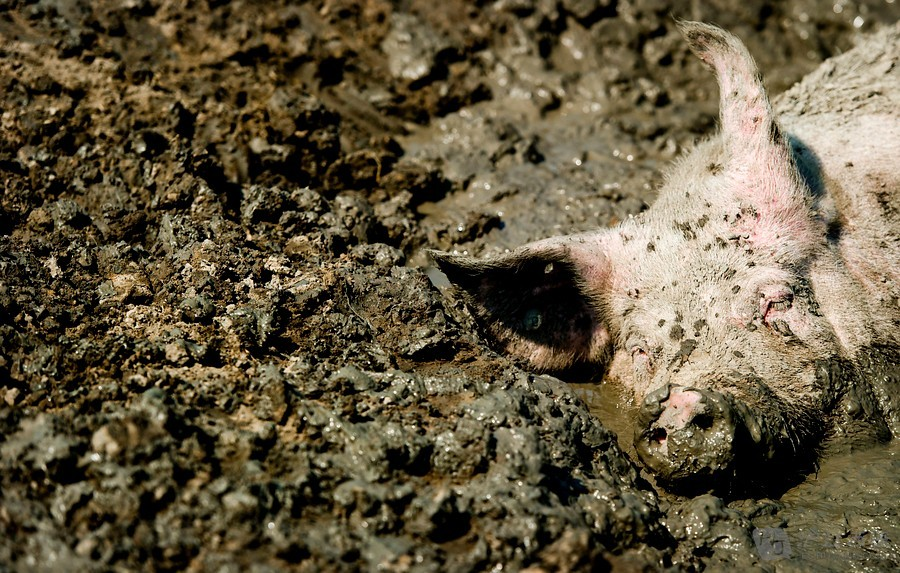 动物世界——来自西班牙的小动物(一)