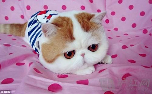 最可爱!萌猫红小胖snoopy爆红网络