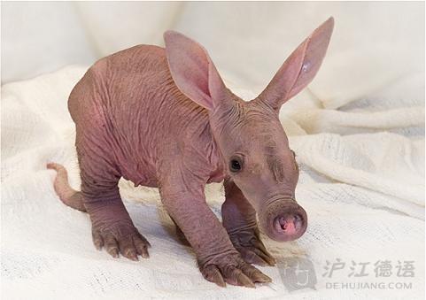没毛的可爱小动物们长啥样?