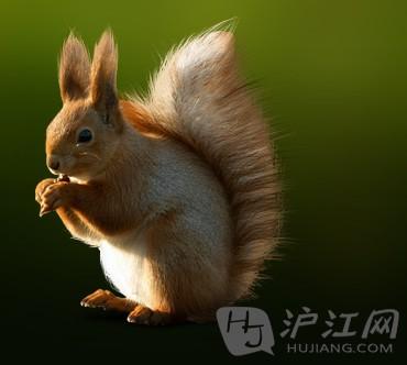 俄语里各种可爱的小动物怎么说(1)