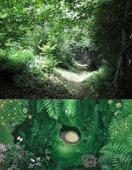 神奇的龙猫居住在茂密的森林里